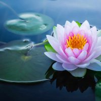The Elusive Lotus Flower – Chapter Fourteen